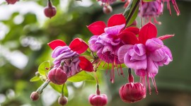 Fuchsia Flower Aircraft Picture