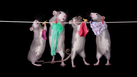 Funny Mouse wallpapers high quality