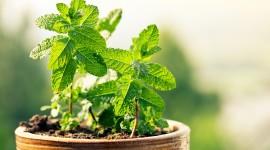 Healing Herbs Best Wallpaper