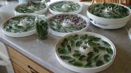 Healing Herbs Wallpaper 1080p