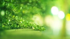 Healing Herbs Wallpaper Background
