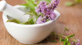 Healing Herbs Wallpaper Download Free