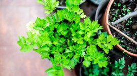 Healing Herbs Wallpaper For PC