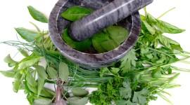Healing Herbs Wallpaper High Definition