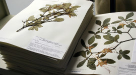 Herbarium High Quality Wallpaper