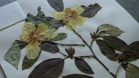 Herbarium wallpapers high quality