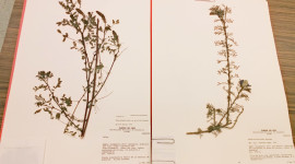 Herbarium Wallpaper Download