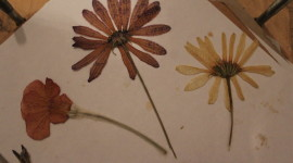 Herbarium Wallpaper Download Free