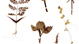 Herbarium Wallpaper For IPhone 6