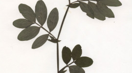 Herbarium Wallpaper For IPhone Download
