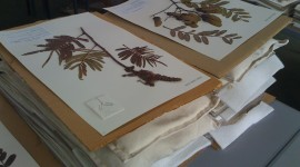 Herbarium Wallpaper Free
