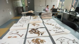 Herbarium Wallpaper High Definition