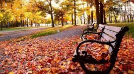 Leaves Bench Desktop Wallpaper
