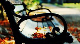 Leaves Bench Desktop Wallpaper HD