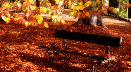 Leaves Bench Image Download