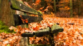 Leaves Bench Photo