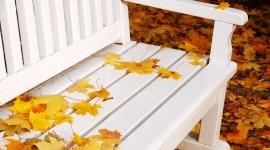 Leaves Bench Photo Download