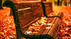 Leaves Bench Photo Free