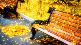 Leaves Bench Picture Download