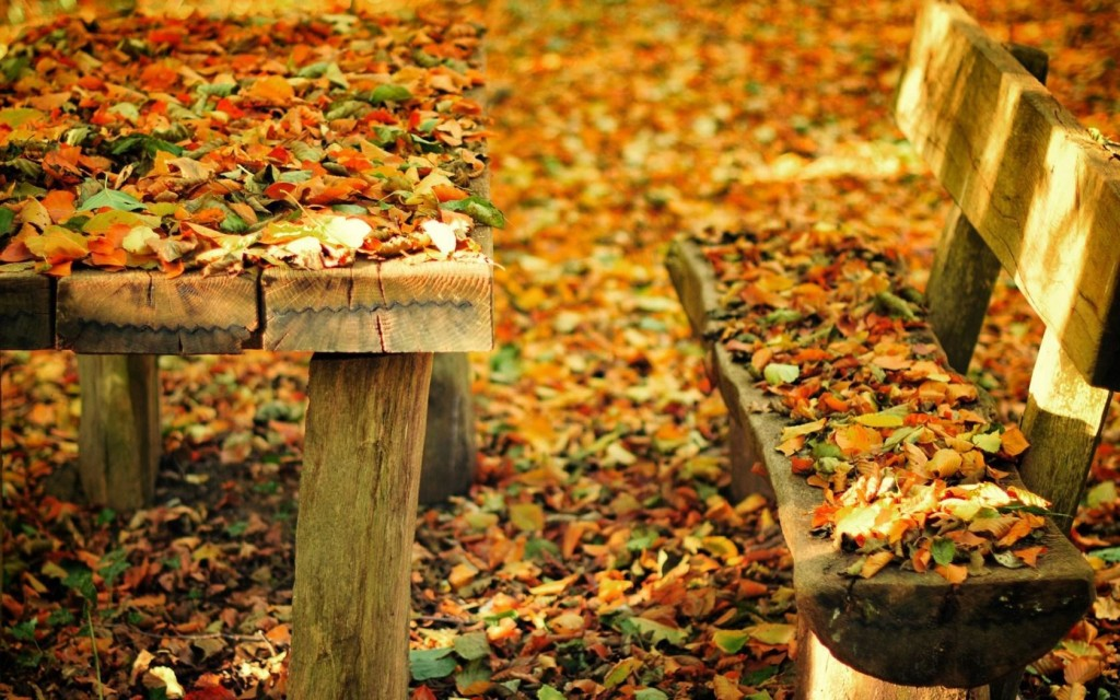 Leaves Bench wallpapers HD