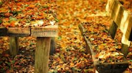 Leaves Bench Wallpaper