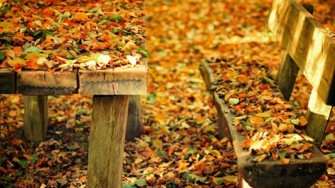Leaves Bench wallpapers high quality