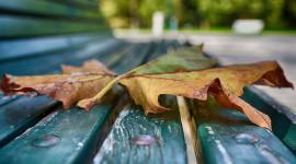 Leaves Bench Wallpaper For Desktop