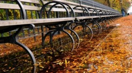 Leaves Bench Wallpaper For IPhone