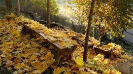 Leaves Bench Wallpaper For PC