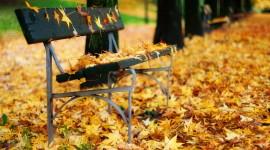 Leaves Bench Wallpaper Free