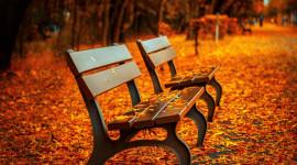 Leaves Bench Wallpaper Full HD