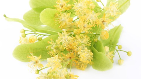 Linden Flowers wallpapers high quality