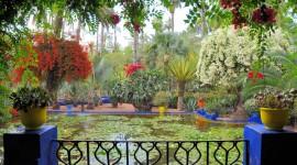 Majorelle Garden Desktop Wallpaper HD