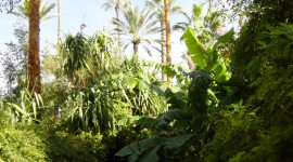 Majorelle Garden Wallpaper For IPhone Free
