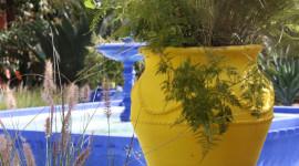 Majorelle Garden Wallpaper For Mobile