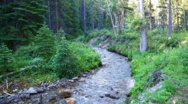Mountain Stream Photo Download