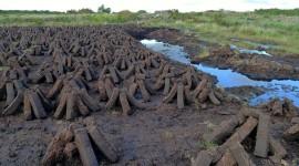 Peat Bogs Wallpaper For Desktop