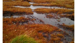 Peat Bogs Wallpaper For IPhone