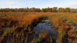 Peat Bogs Wallpaper High Definition