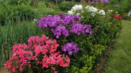 Phlox Wallpaper Gallery
