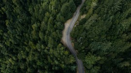 Road In The Forest Top View 1080p