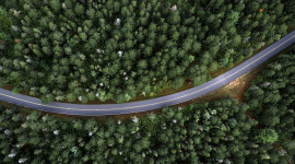 Road In The Forest Top View Wallpaper