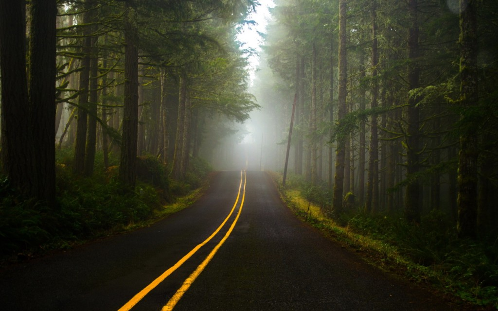Road To The Forest wallpapers HD