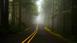 Road To The Forest Wallpaper Download Free