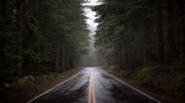 Road To The Forest Wallpaper Gallery