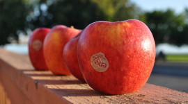 Small Apples Wallpaper Download