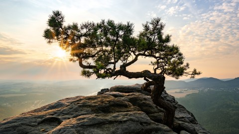 Tree On Rock wallpapers high quality