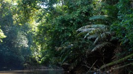 Amazon Jungle Wallpaper