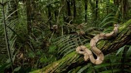 Amazon Jungle Wallpaper Download