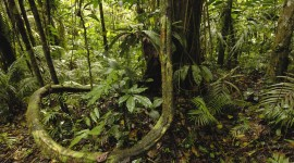 Amazon Jungle Wallpaper For Desktop